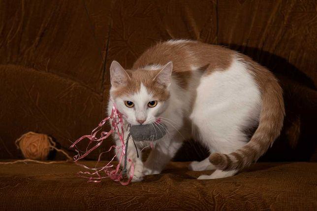Красивый_котенок_отдам_мальчика до года