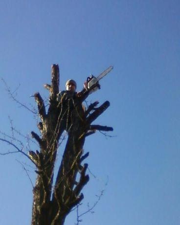 Обрезка Спил деревьев, Дробление веток, Расчистка участков Демонтаж.