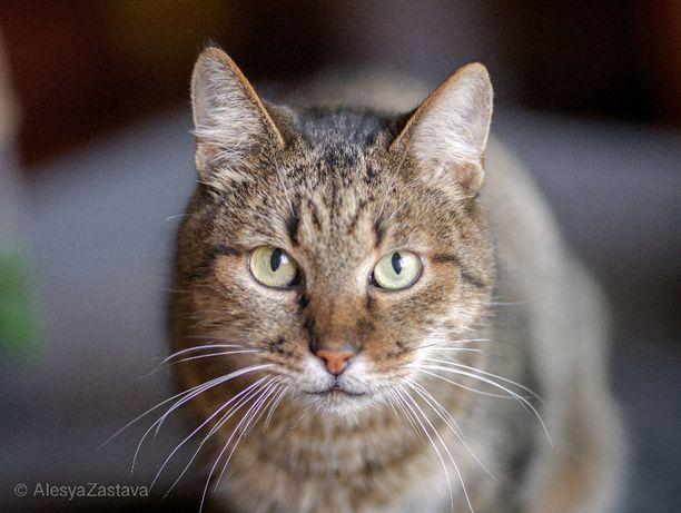 Спасите из приюта очень умного ласкового кота кастрирован