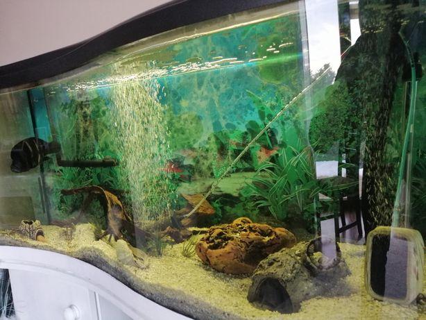 Akwarium malawi Pyszczaki wyposażenie