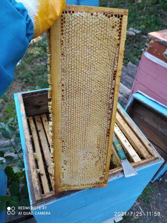 Продам мёд подсолнух ,разнотравье