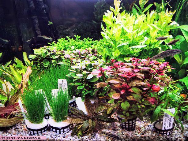 Rośliny akwariowe - największy wybór w Gliwicach - AQUAELZOO GLIWICE