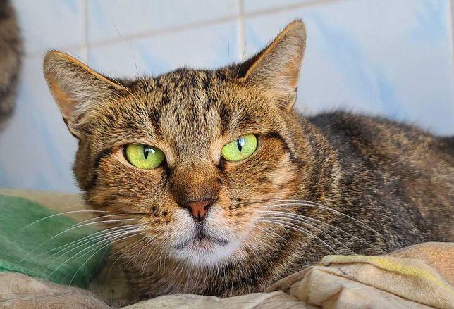 Сором'язлива киця Герда, 1.5 р. Кіт, кішка в добрі руки. Стерилізована