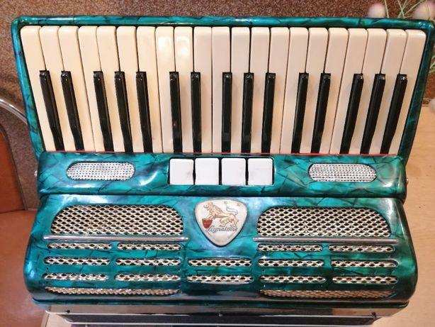 Akordeon, akordeon czeski, akordeon Lignatone, akordeon 80 basów