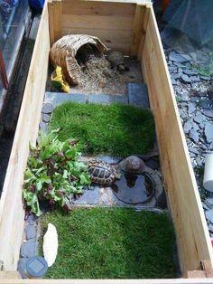 Terraria i akcesoria dla żółwi, żółw, żółwie