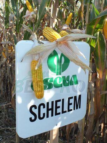 Kukurydza SCHELEM 250/260 FAO OSEVA Nasiona Kukurydzy 2021