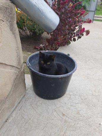 Пропала черная кошечка.