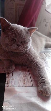 Кот, на    вязку