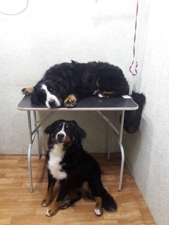 Груминг крупных пород собак
