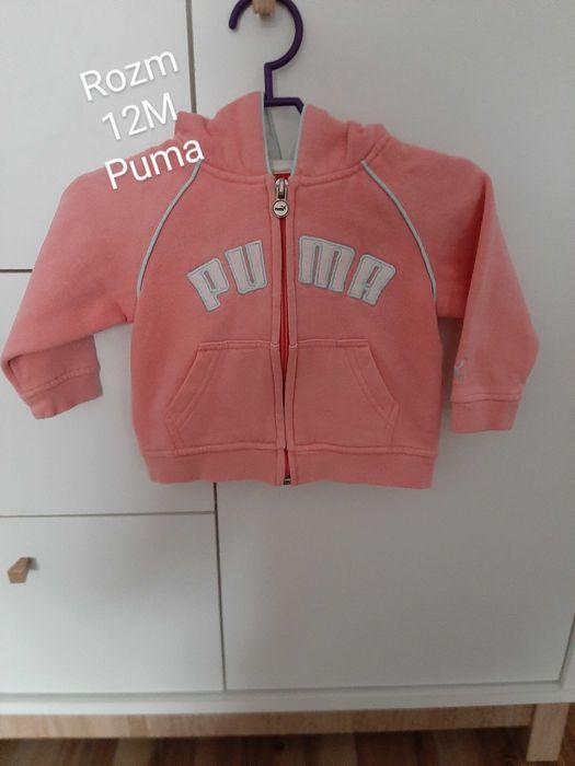 Bluzy/ swetry dla dziewczynki Starachowice - image 1