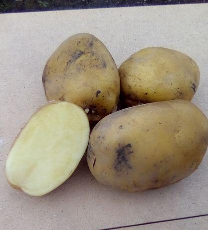 Овощи(картофель, свекла,лук)
