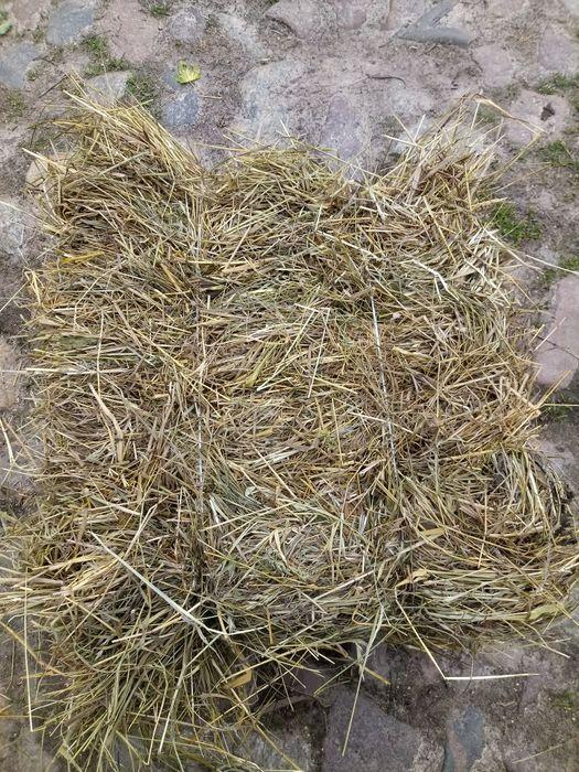 Siano ekologiczne w kostkach snopkach Koszalin - image 1