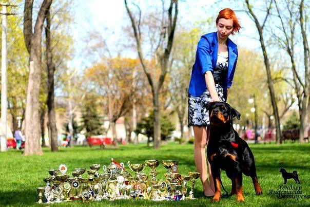 Хендлер - профессиональная подготовка и показ собак на выставках!