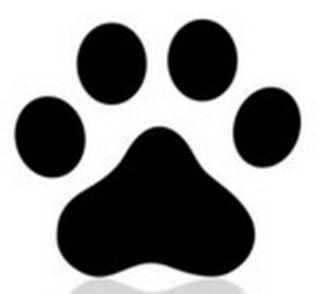 Hotel Para Cães e Gatos