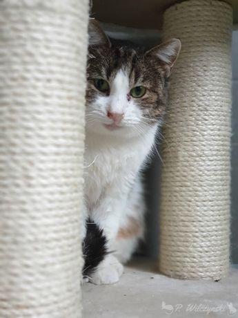 PILNE!Śliczna i grzeczna kotka szuka dobrego domu