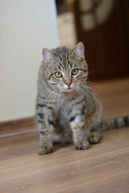 мякошубий полосатий котичок 1р