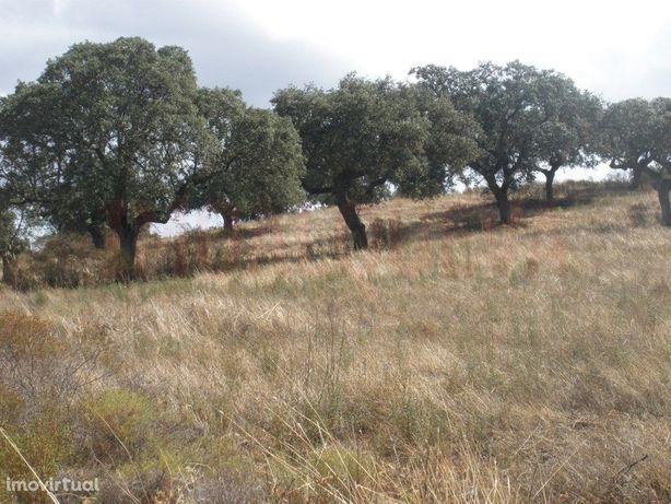 Terreno Venda Mourão