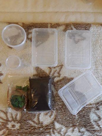 Pojemniki na pająki + torf + listki ozdobne