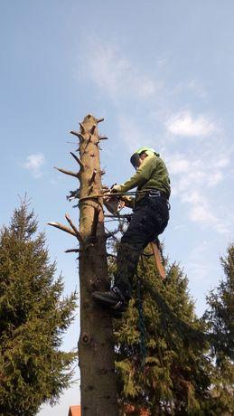 Wycinka drzew metodą alpinistyczną, arborysta, prace w ogrodzie