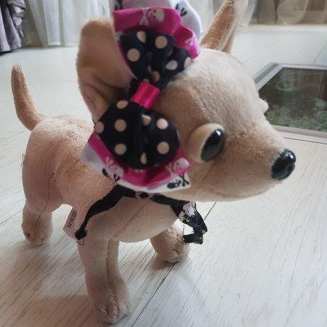 Chi-chi love,собачка с переноской