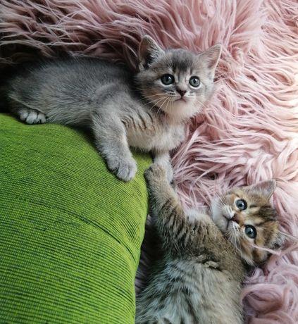 Котята в дорогих ,нарядных шубках
