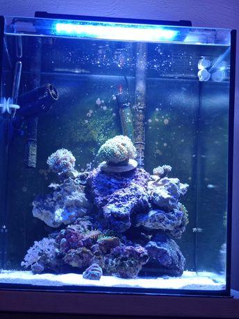 Akwarium morskie życie