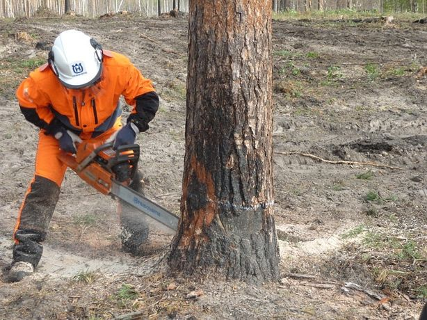 Спил деревьев выкорчевка пней вырубка кустарников