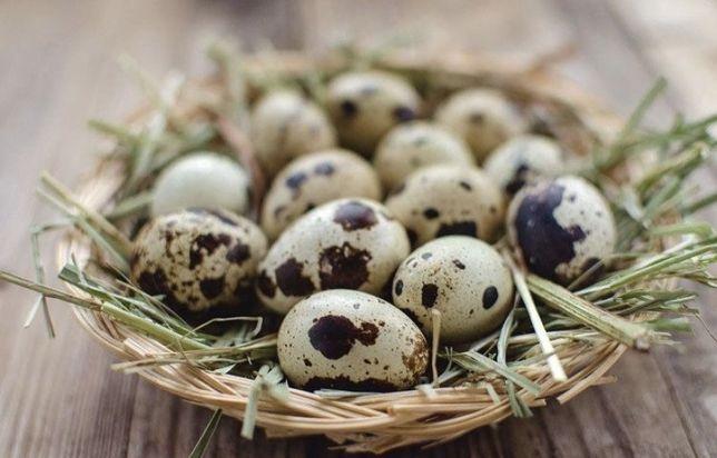 Свежайшие домашние яйца перепелов