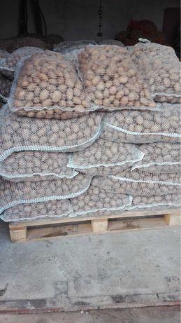 Ziemniaki Catania kal 3-5
