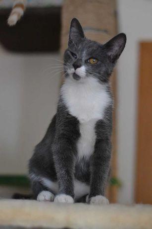 сіромашечка кішечка Барболька 4м
