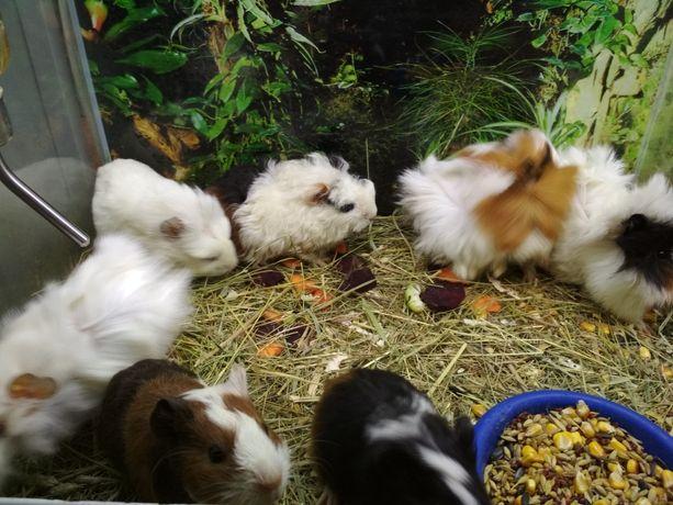 грызуны свинки, кролики, клетки, магазин