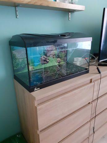 Akwarium 60l z wyposażeniem