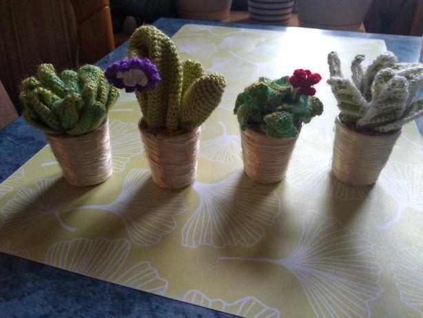 Kaktusy szydełkowe