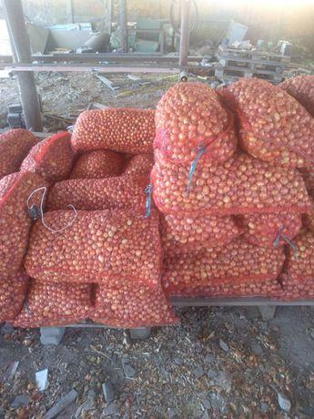 Продам лук севок, арпаж, тиканка, цибуля озима