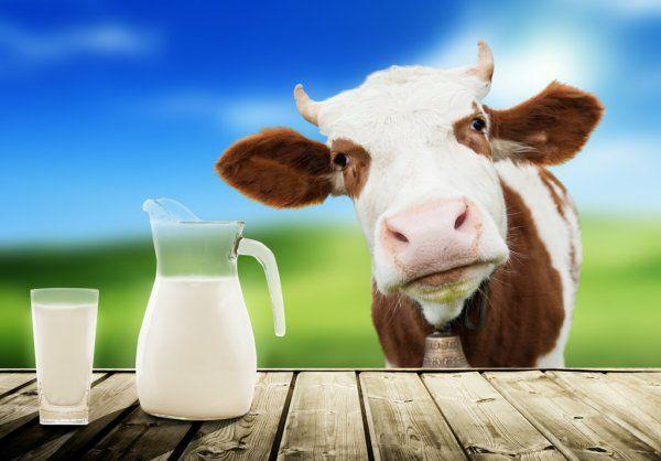 Продам домашнее молочко от нашей любимой коровки