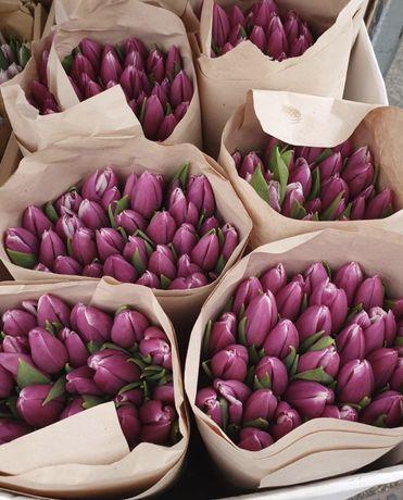 Тюльпаны ОПТ к 8 марта, нарциссы и мускари в горшке