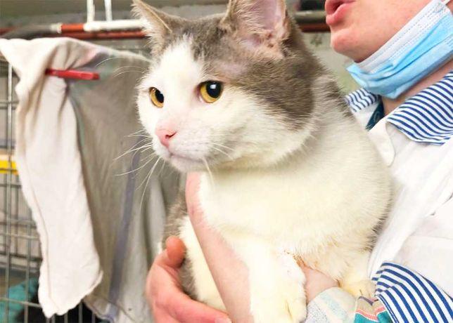 Кото-мальчик Филя (1 годик, кастрирован) кот, котик, котенок, коты