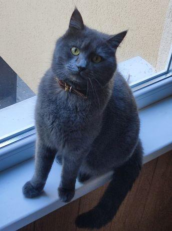 Потерялся серый кот Сергей, Осокорки. Пропал, сбежал кошка пепельный
