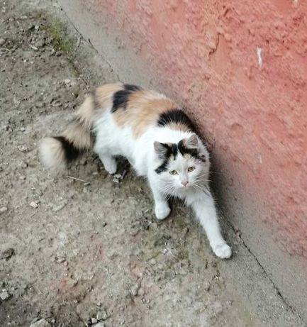 Молодая кошечка ищет дом!