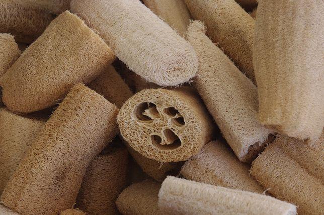 Sementes de luffa 4gr - 10 sementes