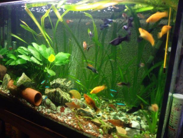 Akwarystyka rybki