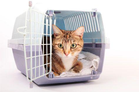 Документы за границу для собак и кошек АВИА