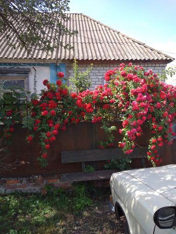 Продам дом в селе Вишневое,Балаклейского рн