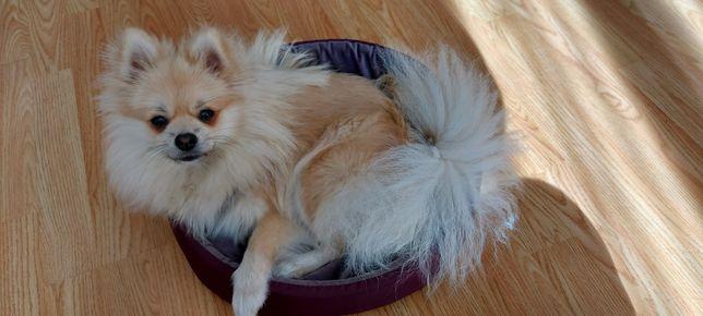 Лежак для маленькой собачки или кота