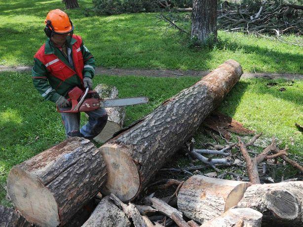 Спил дерева в г.Чернигове и Черниговской области