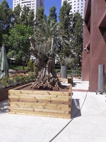 oliveiras centenarias para jardim