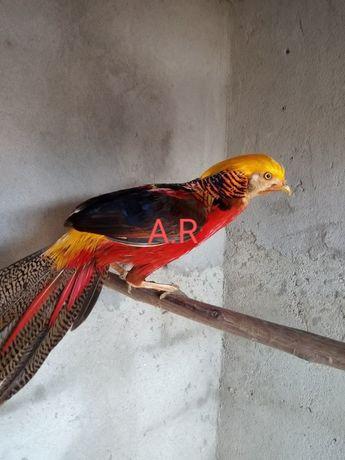 Aves de várias raças