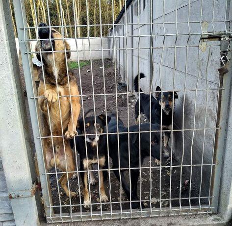 Kochane psy pilnie szukają domow