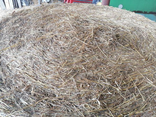 Siano Bale trawy siewne siano wysoka jakość