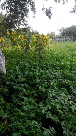 Земельный участок, 8 соток, чернозем